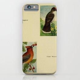 Kingbird Cedar Waxwing10 iPhone Case