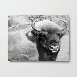 Bison - B/W Metal Print