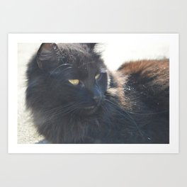Cat in the Sun Art Print