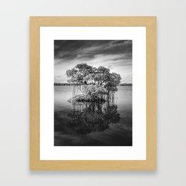Mangove Tree Framed Art Print