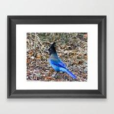 True Blue Framed Art Print