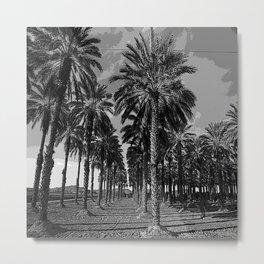 Black & White Date Palms Yuma Pencil Drawing Photo Metal Print