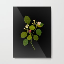 Nictanthes Sambac Mary Delany British Botanical Paper Flower Collage Delicate Flowers Metal Print