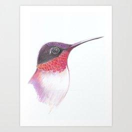 hummingbird face Art Print