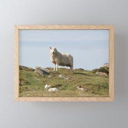Isle of Berneray Lamb Framed Mini Art Print
