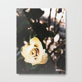 small yellow rose Metal Print
