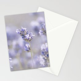 Sweet Lavender Stationery Cards