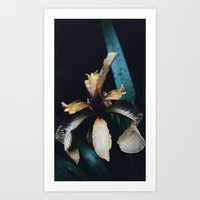 Monochrome Iris Art Print