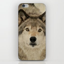 Timber Wolf Portrait iPhone Skin