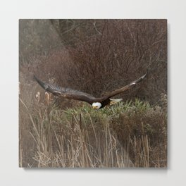Skimming the reeds Metal Print
