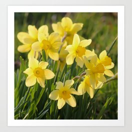 Yellow spring daffodil Photography Art Print