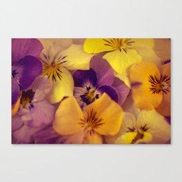Viola bed. Canvas Print