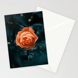 Looking Through || Rose Garden Stationery Cards