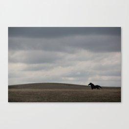 Horse running open prairie Canvas Print