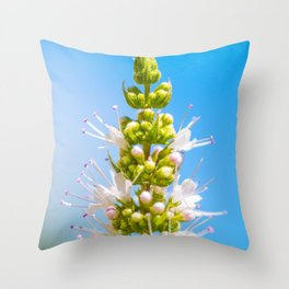 Mint plant white flower blossoming in summer close-up Throw Pillow