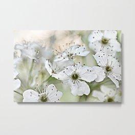 Flowering Pear Metal Print