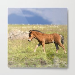 Watercolor Horse 32, Icelandic Pony, Höfn, Iceland, Moving Along Metal Print