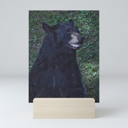 Black Bear Portrait Mini Art Print