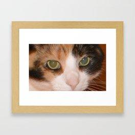 Cat Eyes, Green Eyes, Bedroom Eyes Framed Art Print