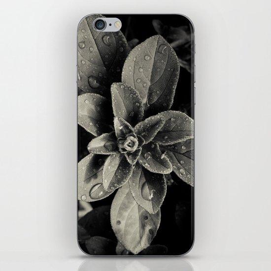 Rainy Leaves  iPhone & iPod Skin
