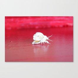 Fall Webworm Moth Canvas Print