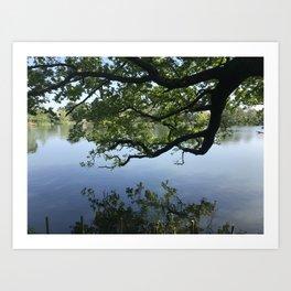 Natures reflection Art Print