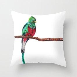 Pharomachrus mocinno Throw Pillow