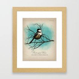 Black-capped Widow Framed Art Print