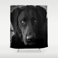 lab Shower Curtains featuring Loyalty  Black Lab  by Peggy Franz   Photography   FranzsFeatur