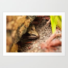 Frog Hide Out Art Print