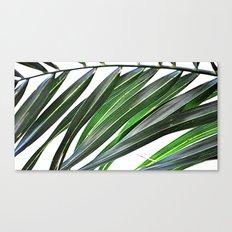 Palm nature Canvas Print