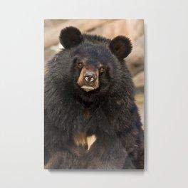 Asian Black Bear Metal Print