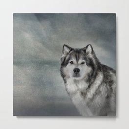 Drawing Dog Alaskan Malamute Metal Print