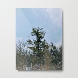 Lonely tree in the forest Metal Print
