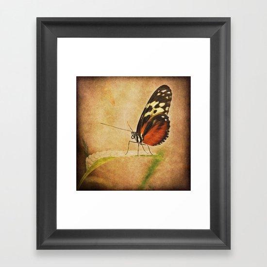 Antique Butterfly Framed Art Print
