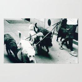 Dog Walker NYC  Rug