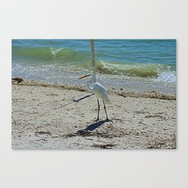 Any Given Day Canvas Print