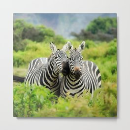 Zebra Couple Nuzzling with Love Metal Print