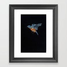 Northern Blue Bird in Flight Framed Art Print