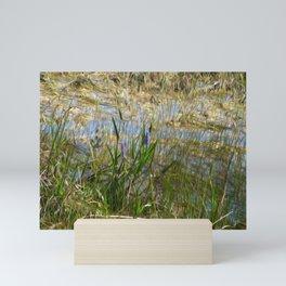 Beauty in the Everglades Mini Art Print