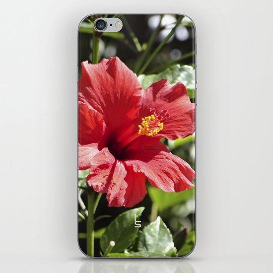 Hibiscus V iPhone & iPod Skin
