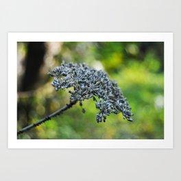 grey flower in autumn Art Print