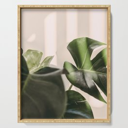 Swiss Cheese Plant - Monstera Deliciosa Leaves Serving Tray