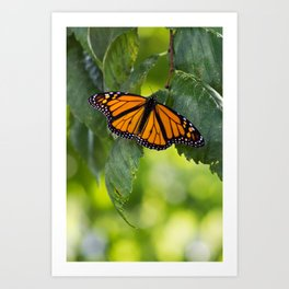 The King of the Butterflies Art Print