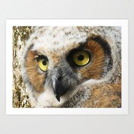 Young Owl close-up Art Print