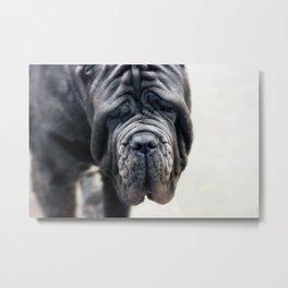 Neapolitan Mastiff Metal Print
