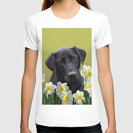 White daffodils with Labrador retriever T-shirt