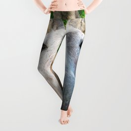 Watercolor Wild Donkey 01, St John, USVI, Hi! Leggings