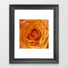 Gold Rose Bud- Orange Roses and flowers Framed Art Print