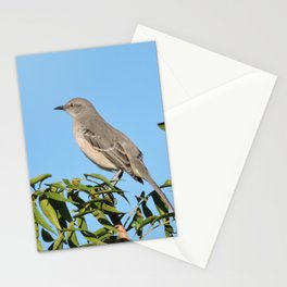 Northern Mockingbird Looks South Stationery Cards